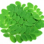 Drumstick Leaves  -1 Bunch